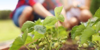 Urban Gardening Program